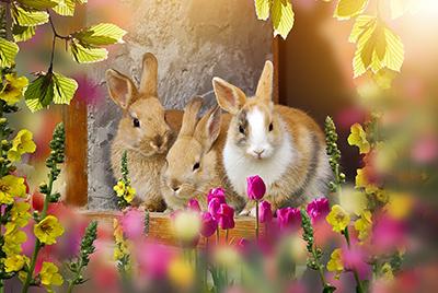 3 Osterhasen schauen durch Blumen und Blätter in die Kamera